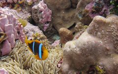 Too late to save the reefs?