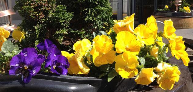 PTSA holds Flower Madness fundraiser