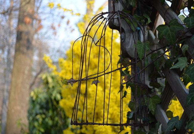 Spring is Blooming in Annandale
