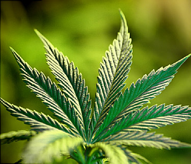 According to CNN, one in eight U.S. adults say they smoke marijuana.