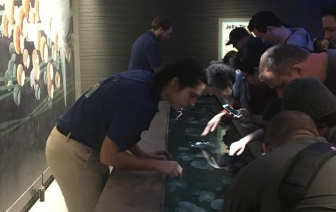 """Junior Emily Shawish works at the National Aquarium in Baltimore. Shawish works on Sundays every other week.  """"I really like working at the aquarium,"""" Shawish said, """"It is a lot of fun working with the animals and talking with people."""""""