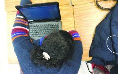 Should students take mental health days?